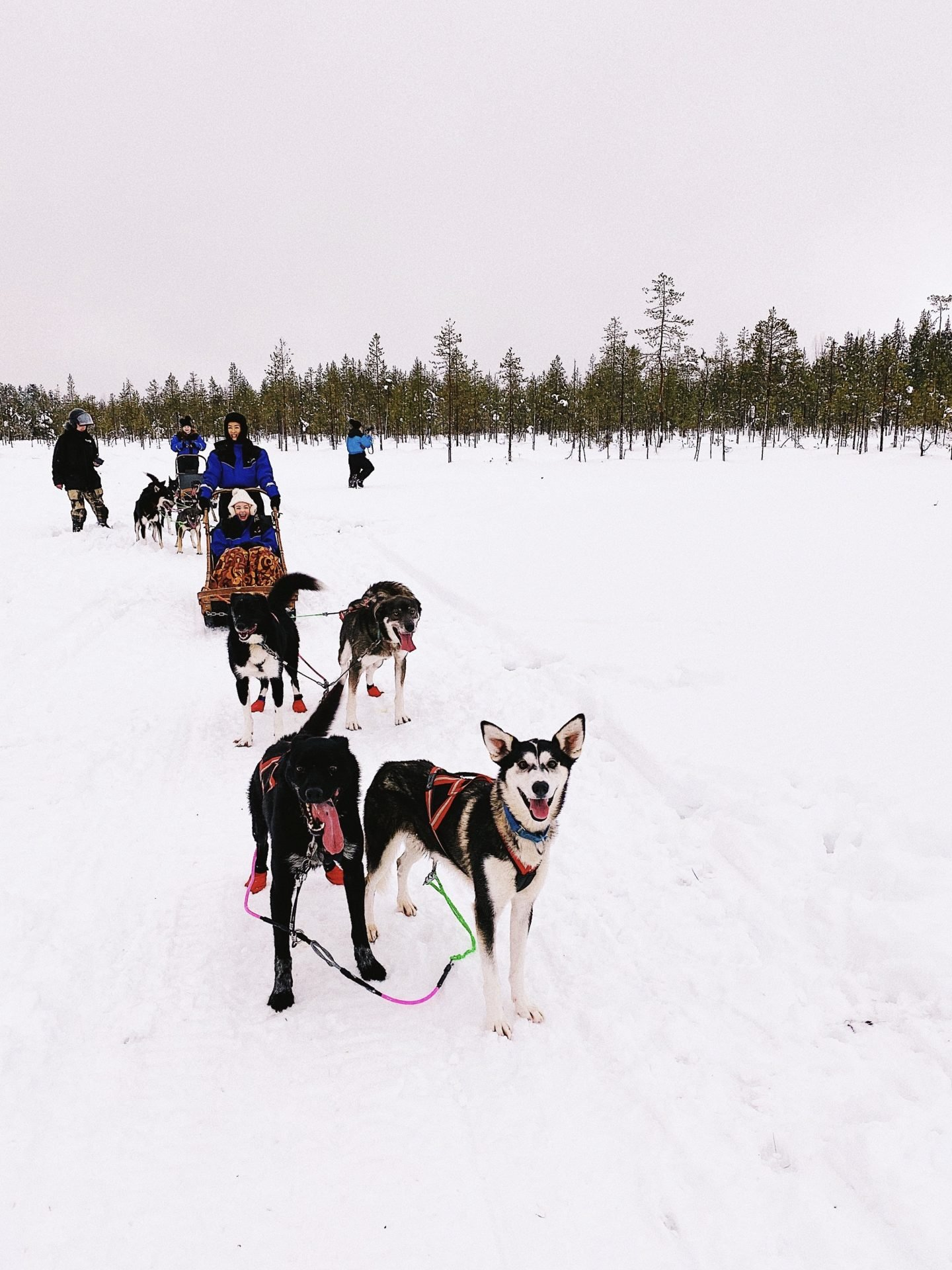Travel guide to Lapland, Finland and Rovaniemi, Finland with Bearhill Husky Ride
