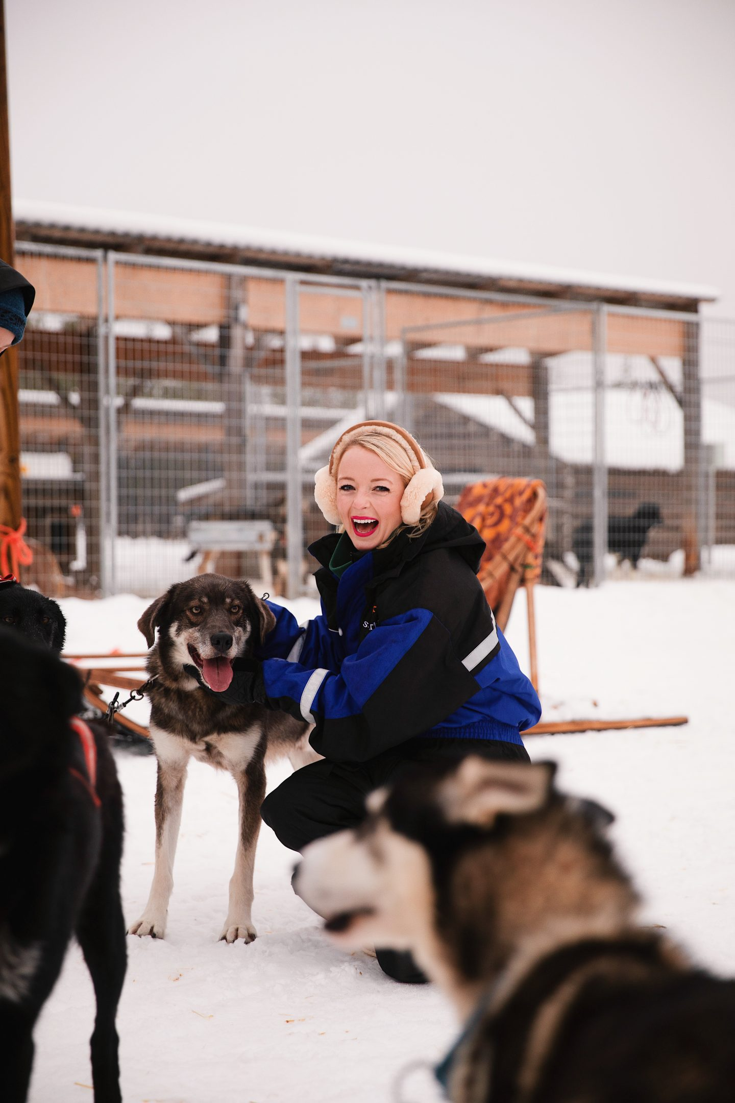Travel guide and travel diary to Lapland, Finland and Rovaniemi, Finland with Bearhill Husky Ride