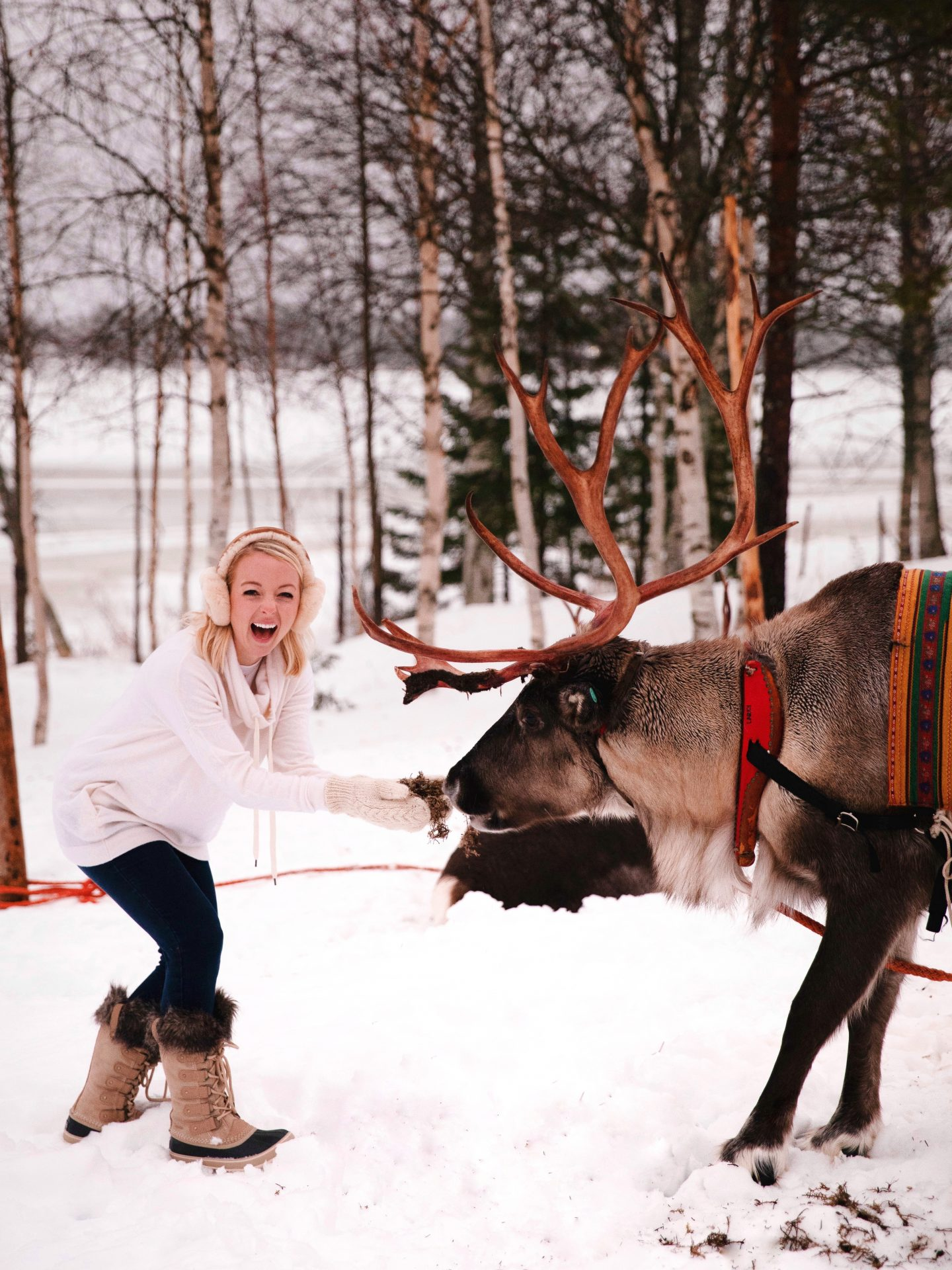 Travel guide and travel diary to Lapland, Finland and Rovaniemi, Finland with Sieriporo Reindeer Experience